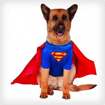 Big Dogs Superman Costume