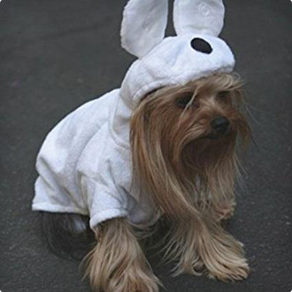 Cuddly Teddy Bear Dog Costume