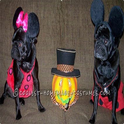 Cute Mickey and Minnie Mouse Pug Costumes