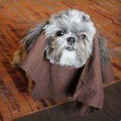 DIY Ewok Dog Costumes