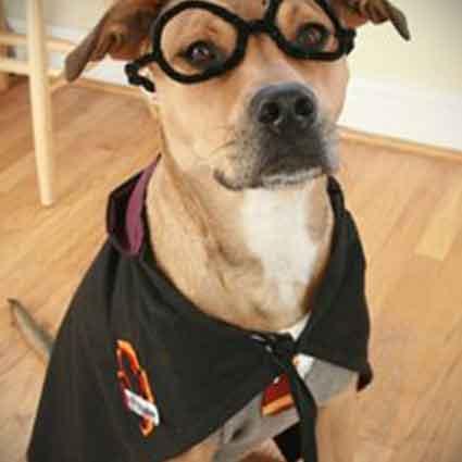 DIY Harry Potter Dog Costume