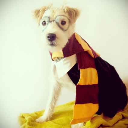 DIY Harry Potter Puppy Costume