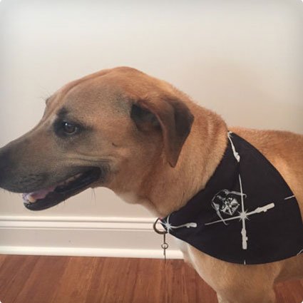 Darth Vader Dog Collar Bandana