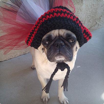 Dog Pirate Halloween Costume