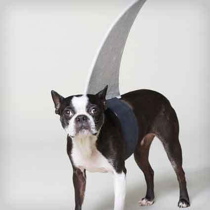Dog Shark Halloween Costume