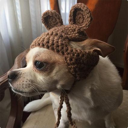 Ewok Dog Hat