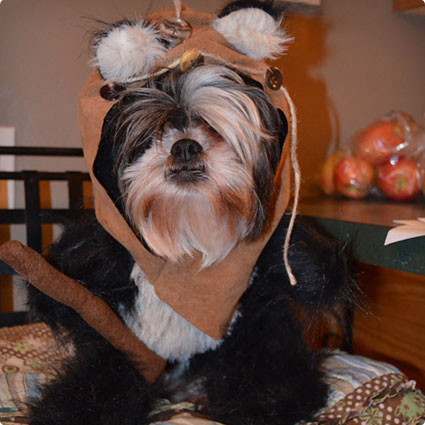 Ewok-Inspired-Dog-Costume