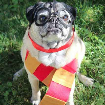 Harry Pawter Pet Costume