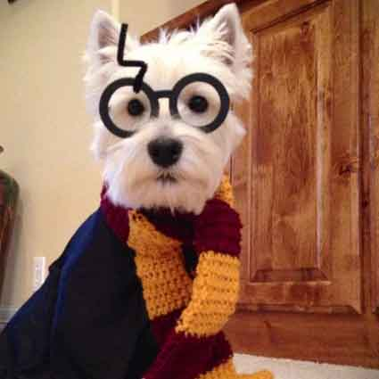 Harry Potter Dog Costume