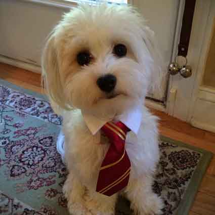 Harry Potter Inspired Dog Collar
