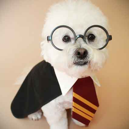 Harry Potter Inspired Dog Costume