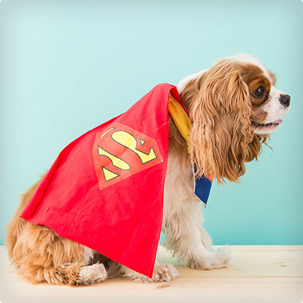 How to DIY a Superman Dog Costume