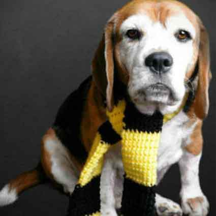 Hufflepuff Inspired Dog Scarf