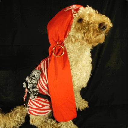No Sew DIY Dog Pirate Costume