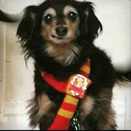 Pet Harry Potter House Scarves