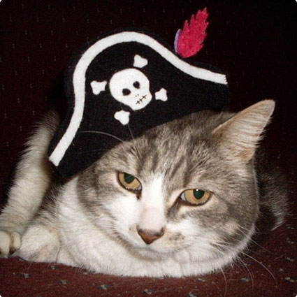 Pet Pirate's Hat