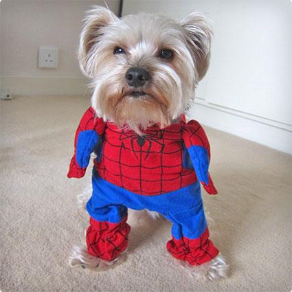 Pet Spiderman Costume