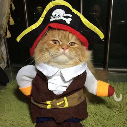 Pirates Dog Clothes Costume