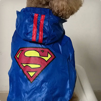 Puppy Superman Vest Costume
