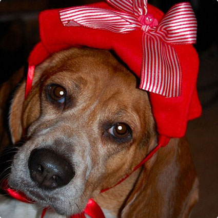Red Bow Pirate Dog Hat