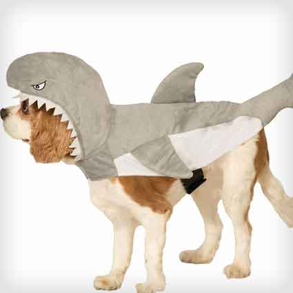 Shark Attack Dog Costume