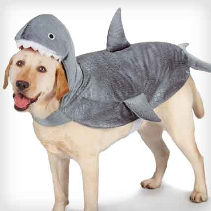 Shark Costume for Dogs