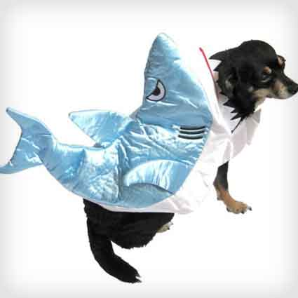 Shark Dog Outfit