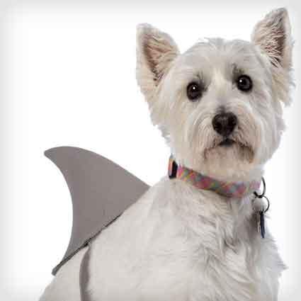 Shark Fin Dog Costume