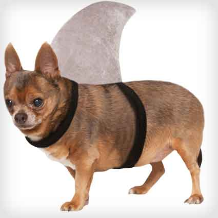 Shark Fin Dog Costume