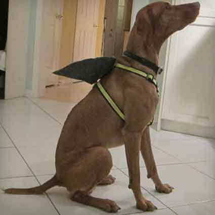 Shark Fin Dog Harness