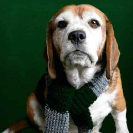 Slytherin Inspired Dog Scarf
