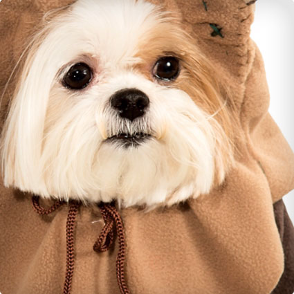 453470967ed 12 Beyond Adorable Ewok Dog Costumes (ermahgerd!) - Costume Yeti