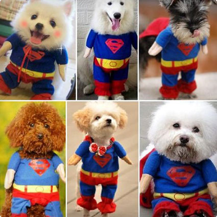 Superman Dog Coat