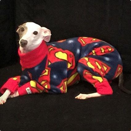 Superman Dog Jammies