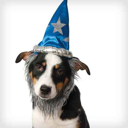 Wizard Hat with Beard for Pets