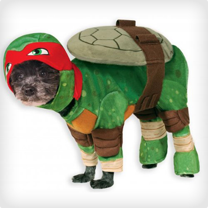Teenage Mutant Ninja Dog