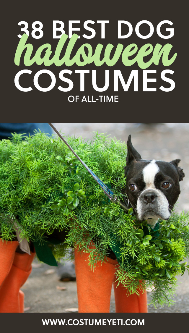 Love this list of the best dog Halloween costumes of all-time! So many great ideas.