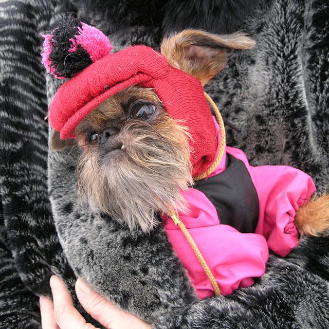 Halloween Dog Dress Size Small Dog Dress Glow in the dark dog dress last one Halloween