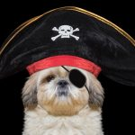 40 Pirate Dog Costumes That Will Melt Your Heart