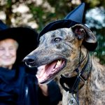 25 Magical Harry Potter Dog Costumes