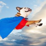 44 Superman Dog Costumes for Your Pup of Steel