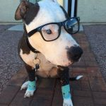 Super Simple Hipster Dog Costume