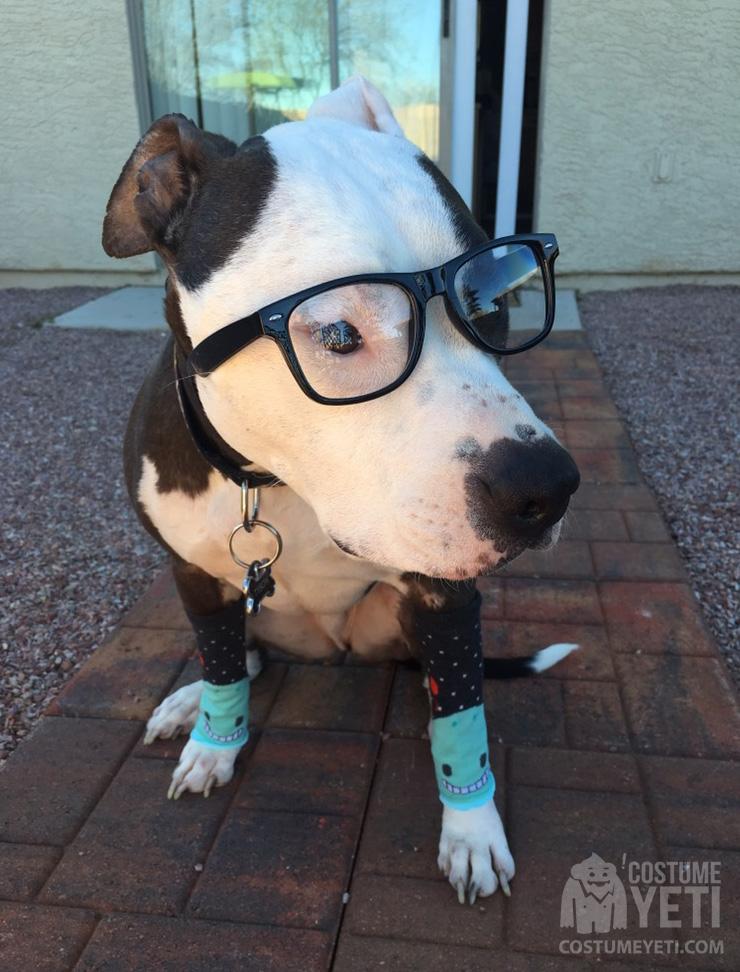 Super Simple Hipster Dog Costume