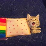 IRL Nyan Cat Costume