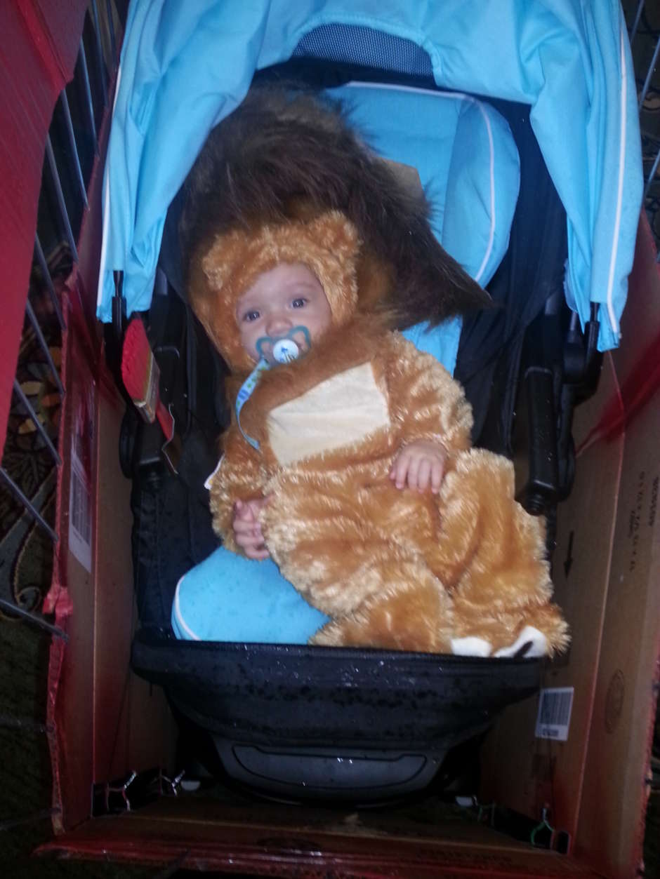 Circus Cart With Lion Baby