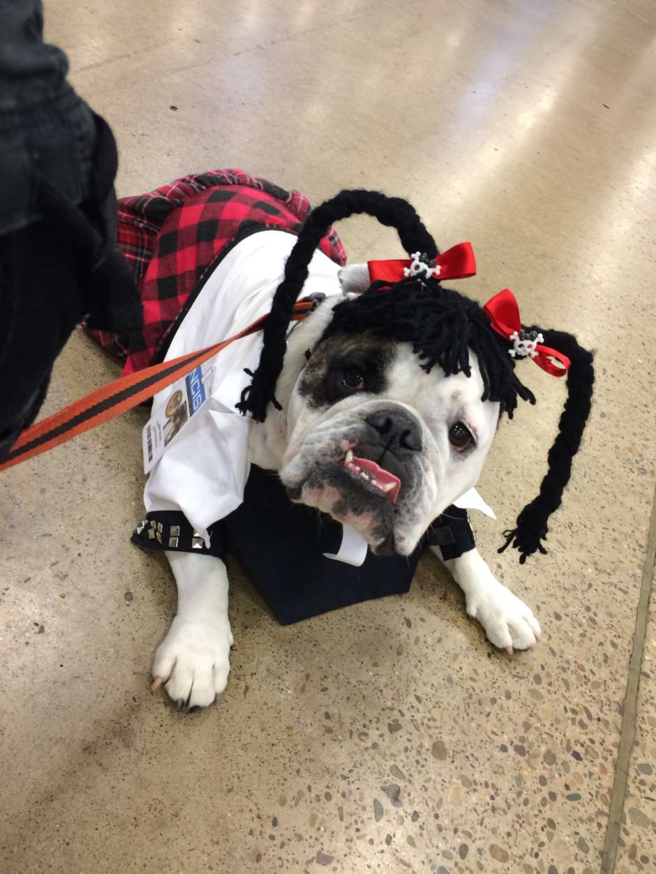 I raided my craft box and found ribbon and skulls buttons to attach to the braids like Abby wears. bulldog costume & Abby Sciuto NCIS Forensic Scientist Dog Costume | Costume Yeti