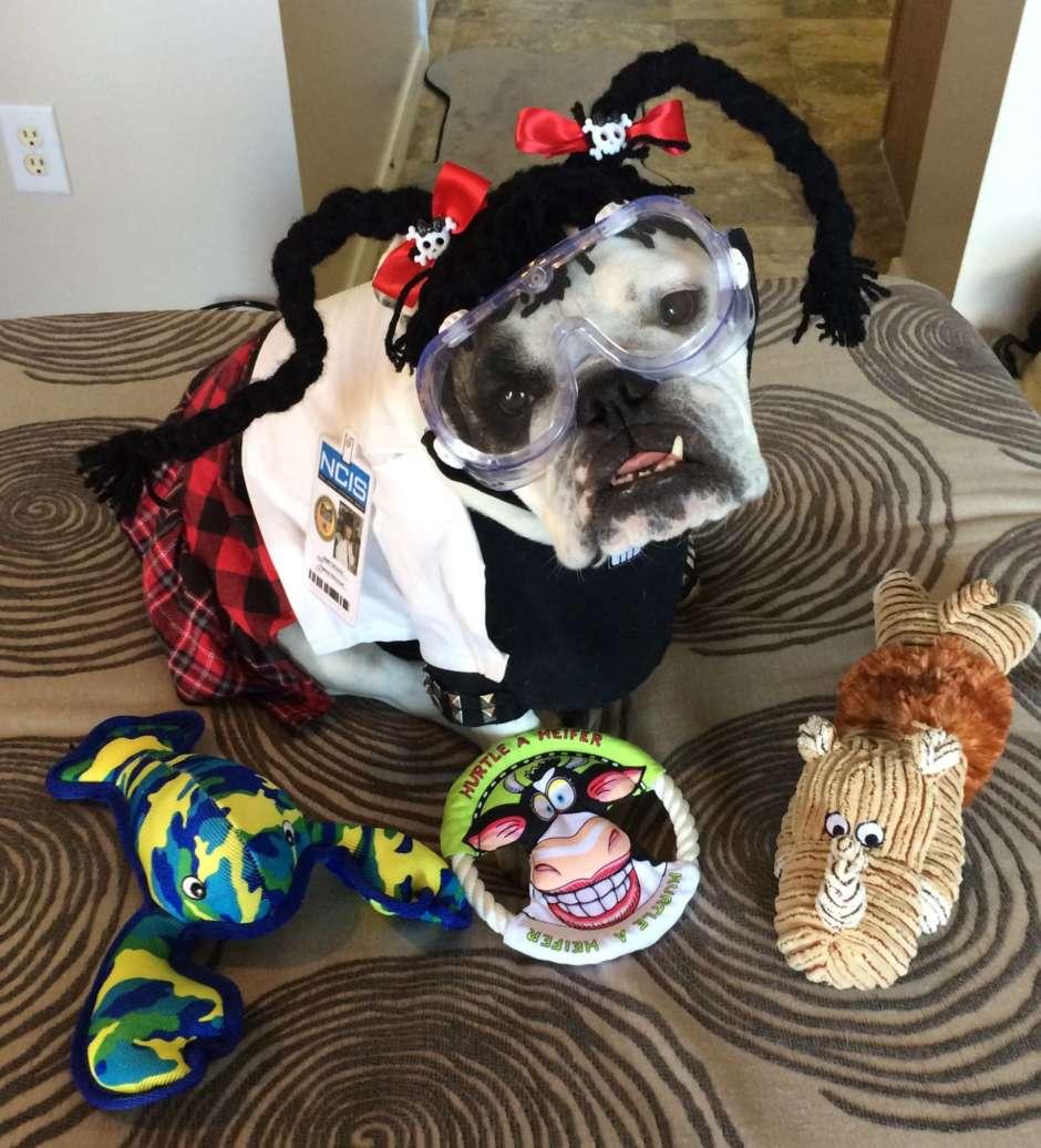abby sciuto forensic scientist dog costume