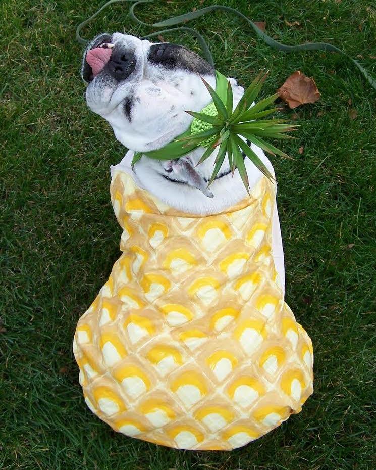 cute bulldog costume