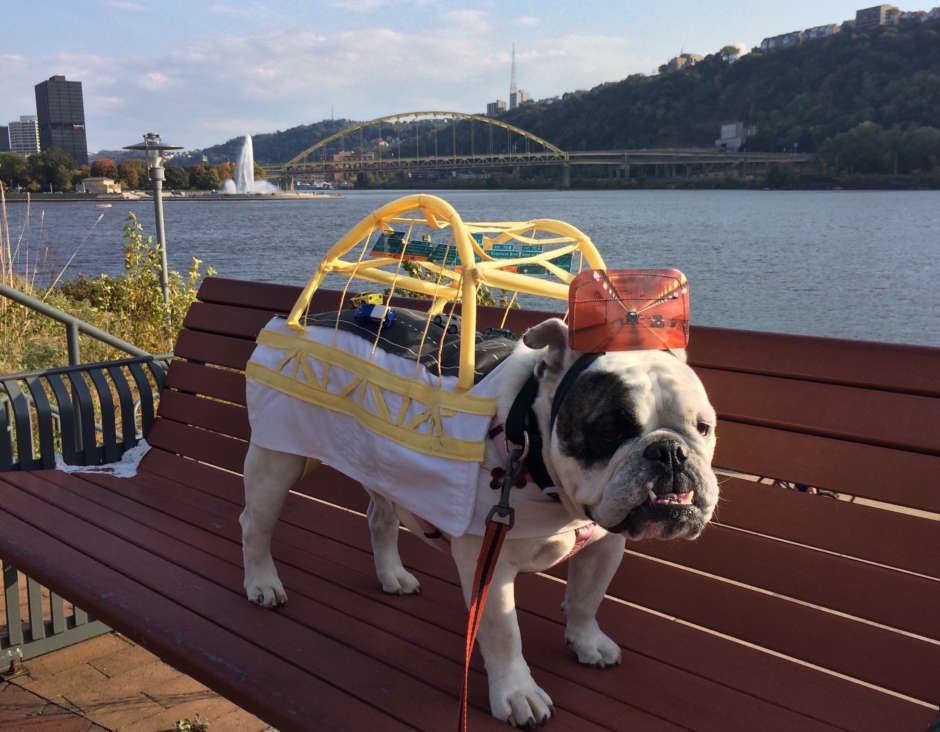 diy dog bridge costume