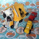 DIY MACK Truck Bulldog Costume